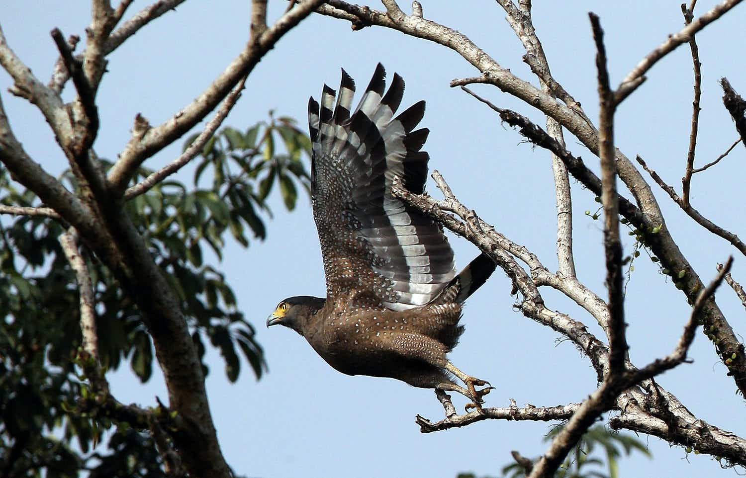 Birdwatching in Malaysia: an essential guide