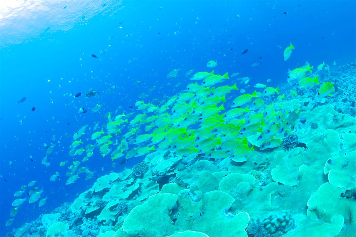 Diving in paradise: underwater adventures in Palau