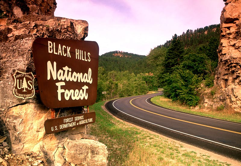 Entrance to Black Hills National Forest. Image by John Coletti / AWL Images / Getty