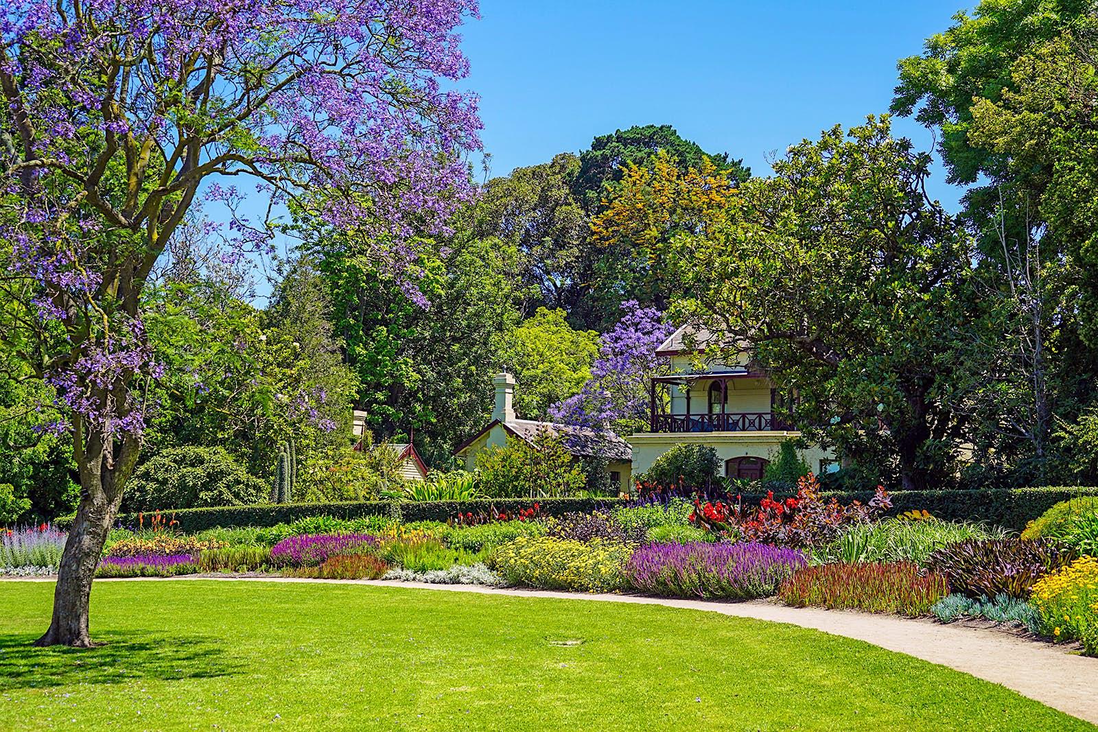 Une image d'un jardin soigné avec des arbustes à fleurs et un arbre en fleurs au Royal Botanic Gardens de Melbourne.