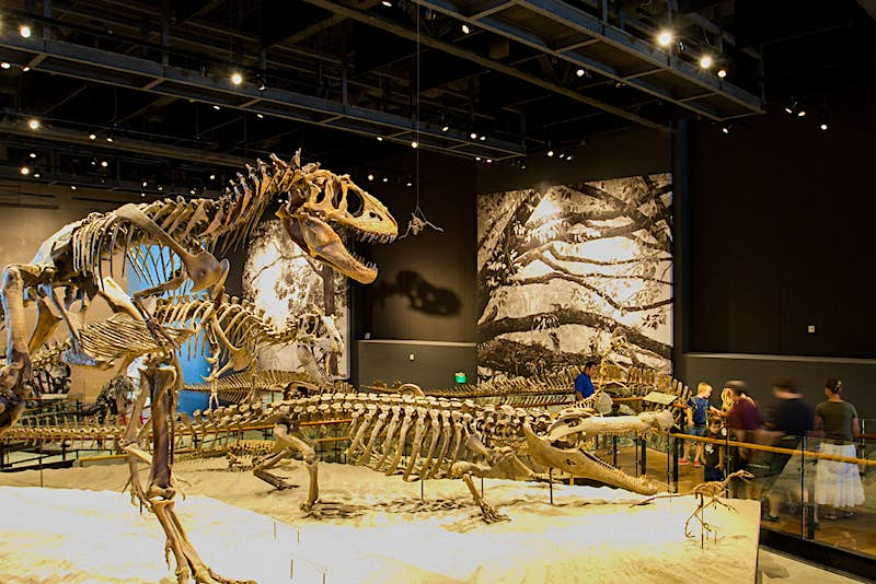 The Natural History Museum provides hours of entertainment (and education) for kids and adults alike. Image by Andy Christiani / Lonely Planet