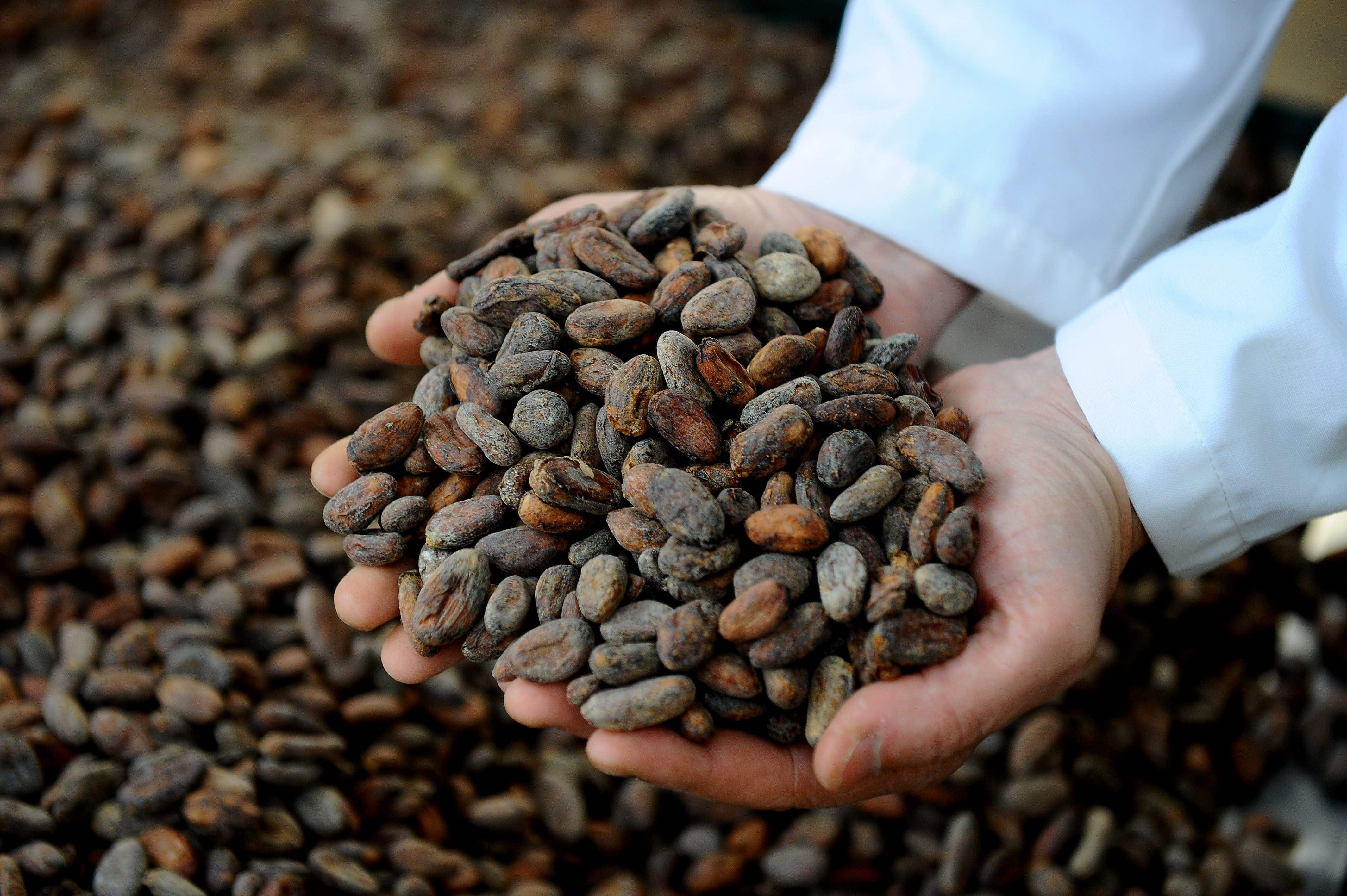 Spilling the beans: exploring Ecuador's elusive chocolate industry