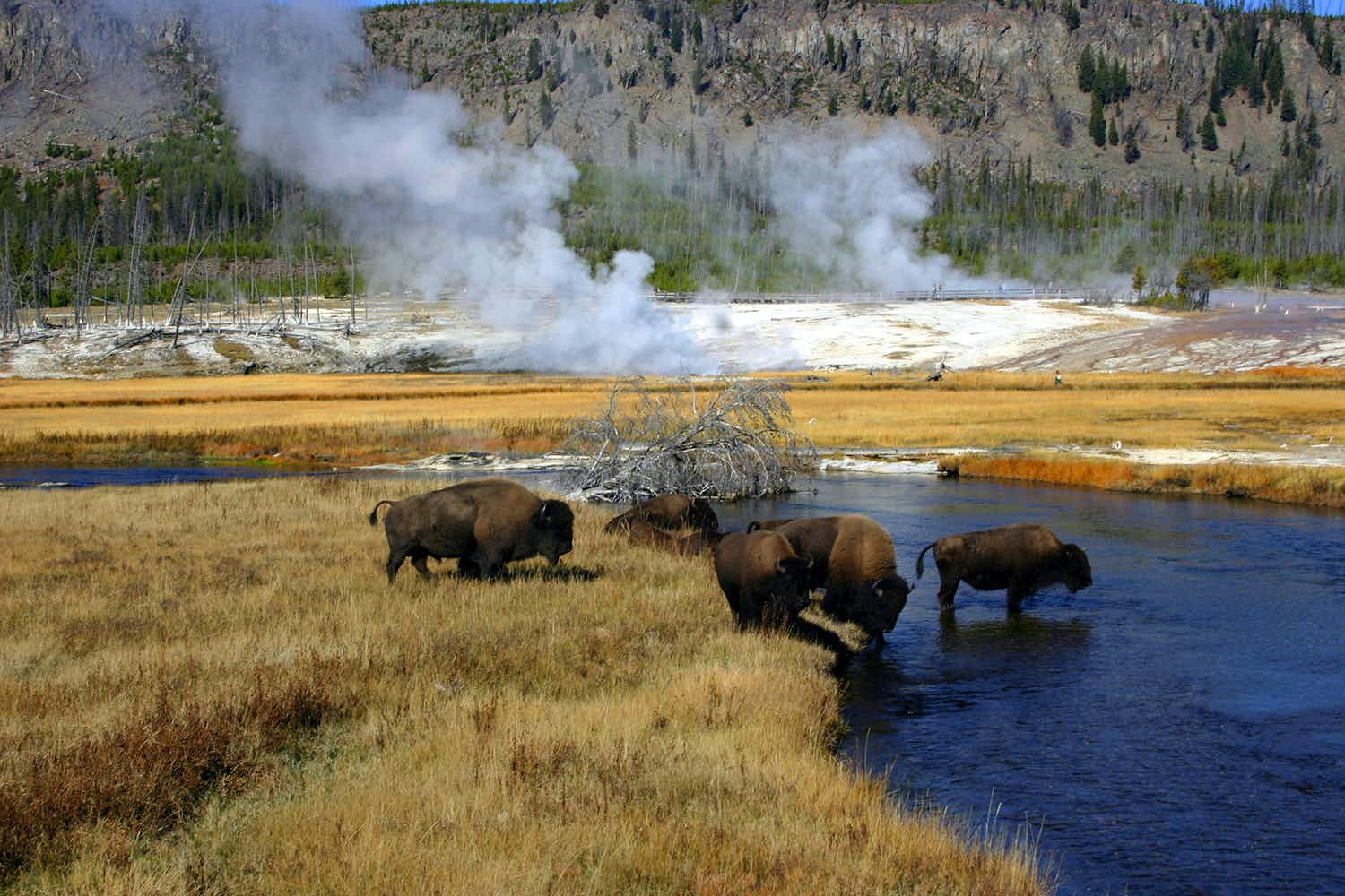 Insider's guide to Yellowstone: where to trek and geyser gaze without the crowds