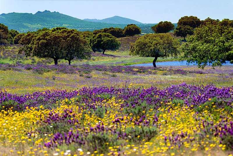 Unexplored Spain: road-tripping around Extremadura