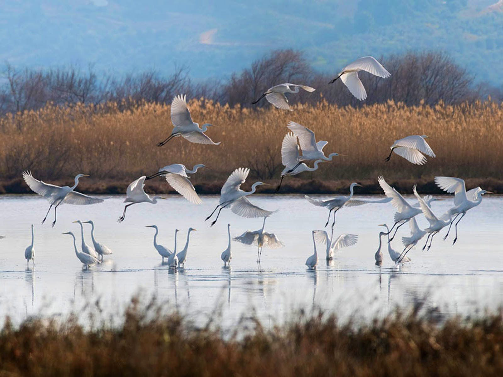 A flock of birds in the Messinia region of the Peloponnese @ courtesy of costanavarino.com