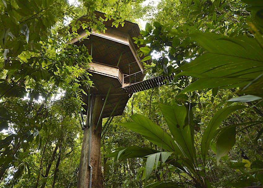 Vista de una casa en el árbol desde el suelo en Finca Bellavista, Costa Rica