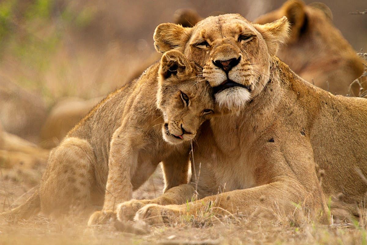 Safari without the big bucks