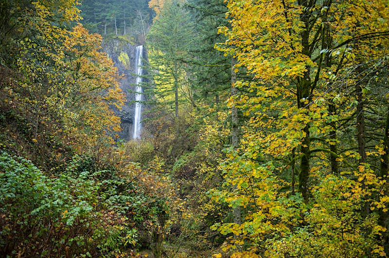 Portland's best hikes and gardens