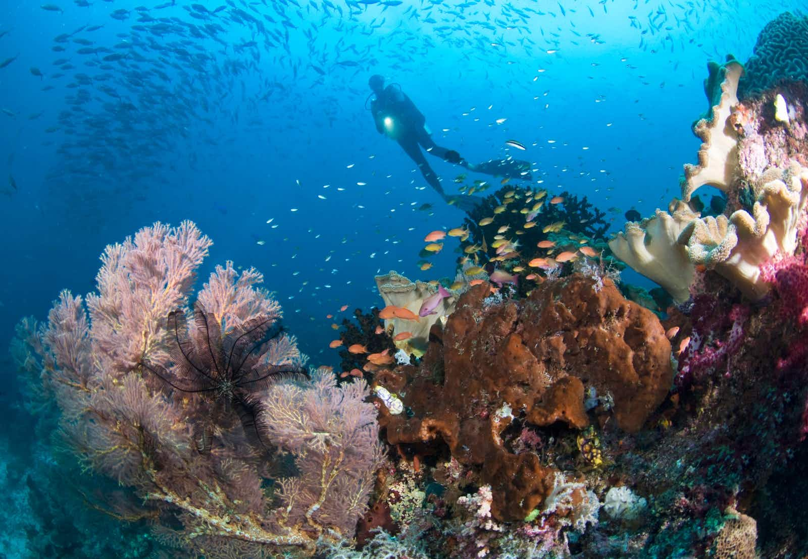 A diver explores the coral reef in Raja Ampat, Indonesia © Darryl Leniuk / Getty Images