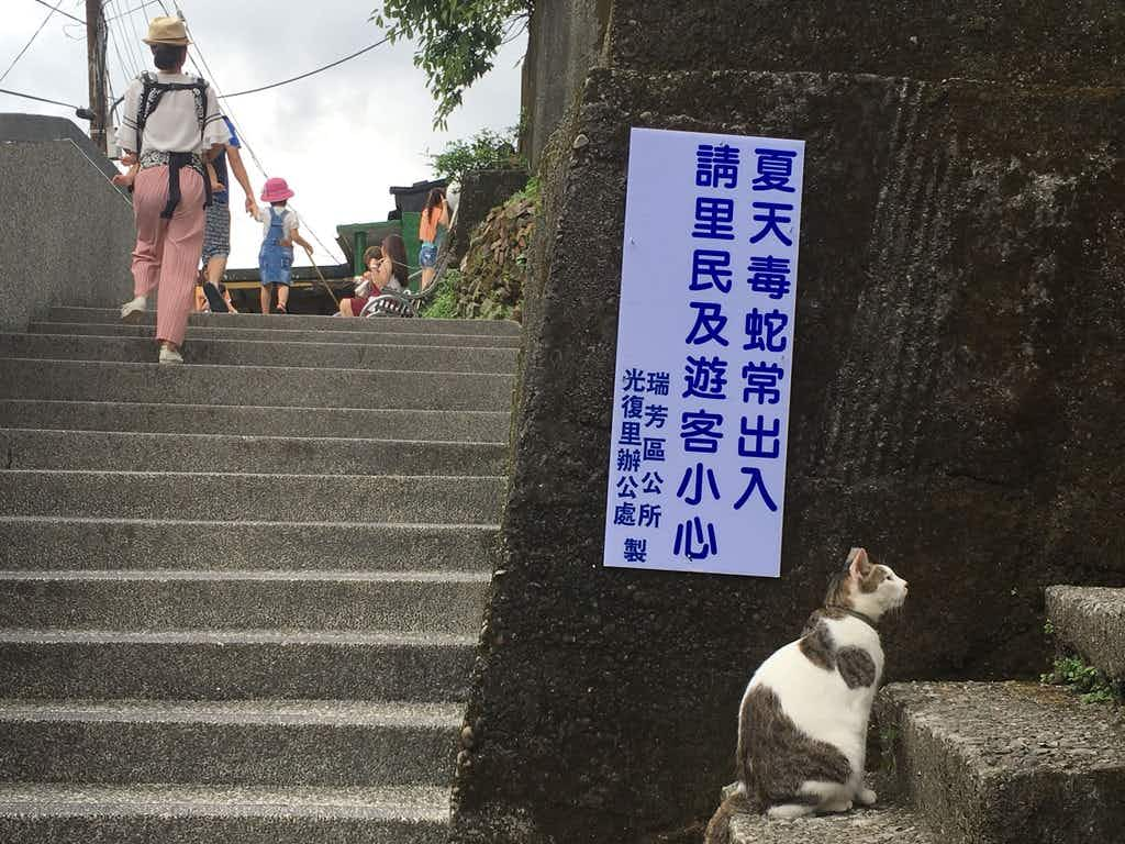 Welcome to purridise: Taiwan's Houtong Cat Village