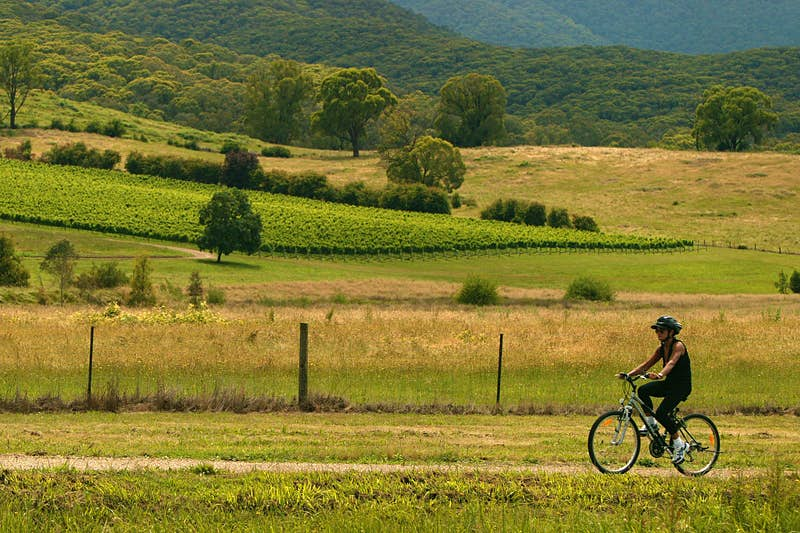 nrn041213.001.008 The Age. Epicure. A cyclist on the Murray to the Mountains Rail Trai near Porepunkah. Photo Neil Newitt