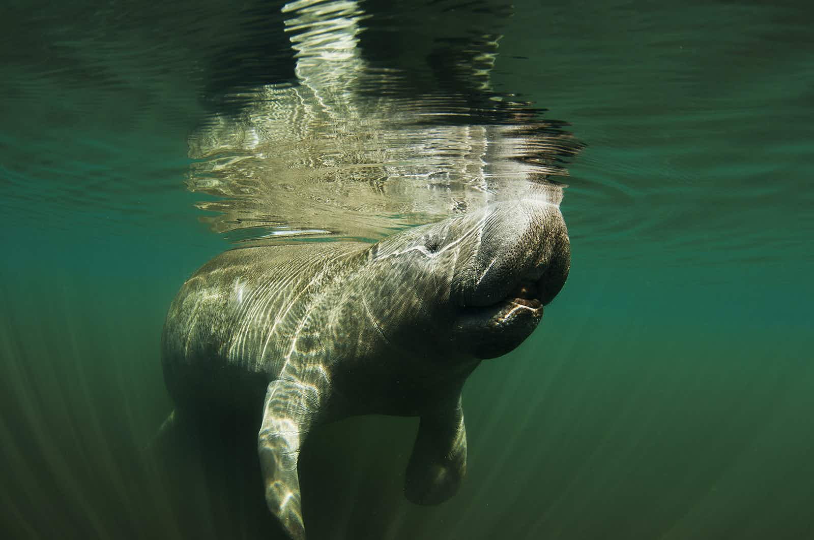 Incredible nature and wildlife around Fort Myers & Sanibel