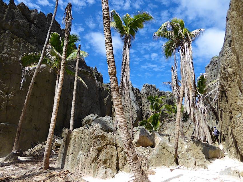 Пальмы в Того Пропасть © Brett Atkinson / Lonely Planet