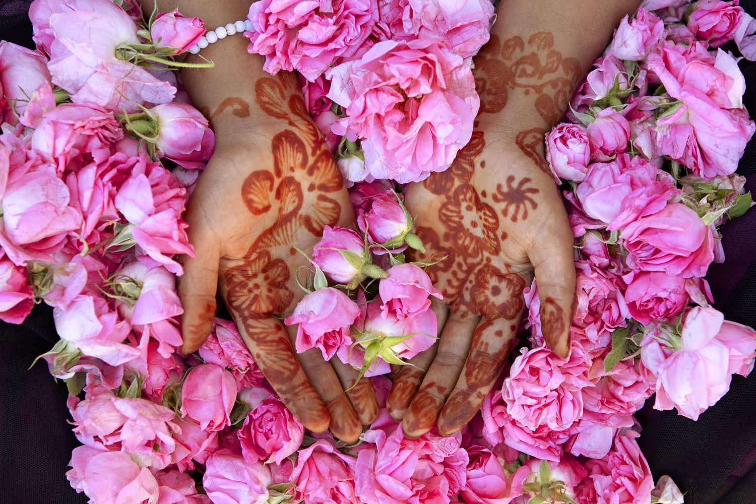 LPT Morocco May 2016 - Fresh roses in the hands of Latifa Abrouch, a local young woman who picks them. The hand decoration is henna, used to decorate for festive occasions and also to aid healing. The black netting seen under the roses is a fine collecting bag used when picking; to shade the buds from the sun and to prevent bruising to the petals.
