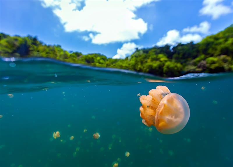 The Republic of Palau's famous Jellyfish Lake © BlueOrange Studio / Shutterstock