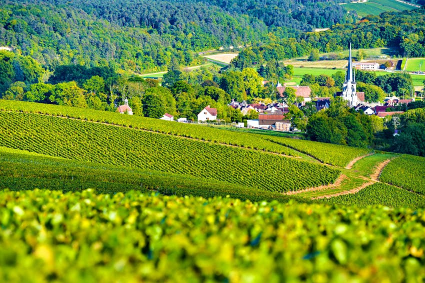 Green vineyard hills with a small town in the background.  A steeple rises from a town and there is a thick forest beyond