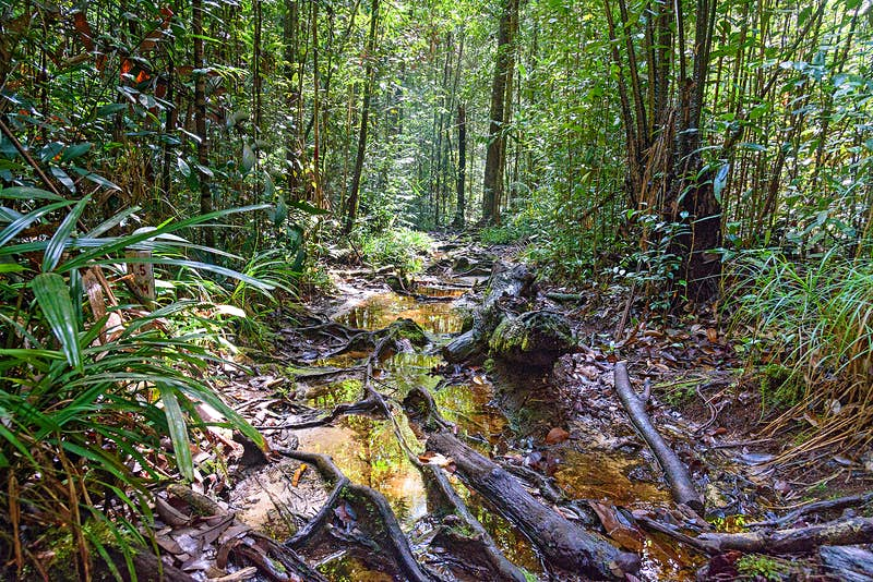 Features - Trail in the rainforest at Bako National Park