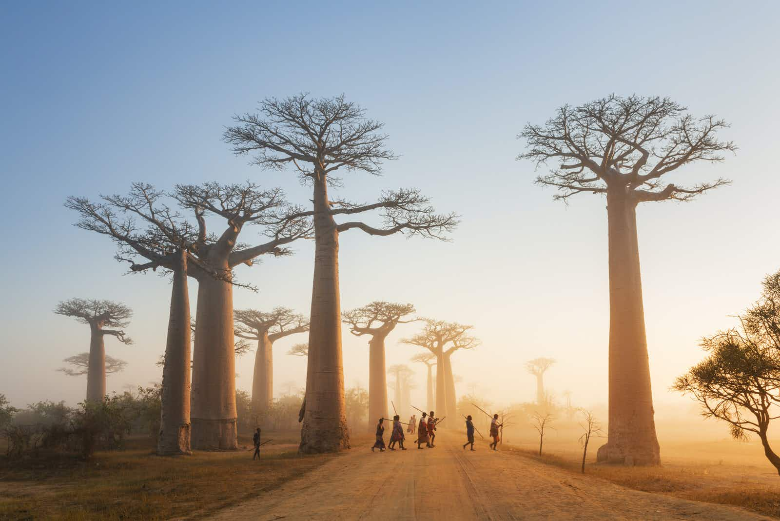 Madagascar: an island unlike any other