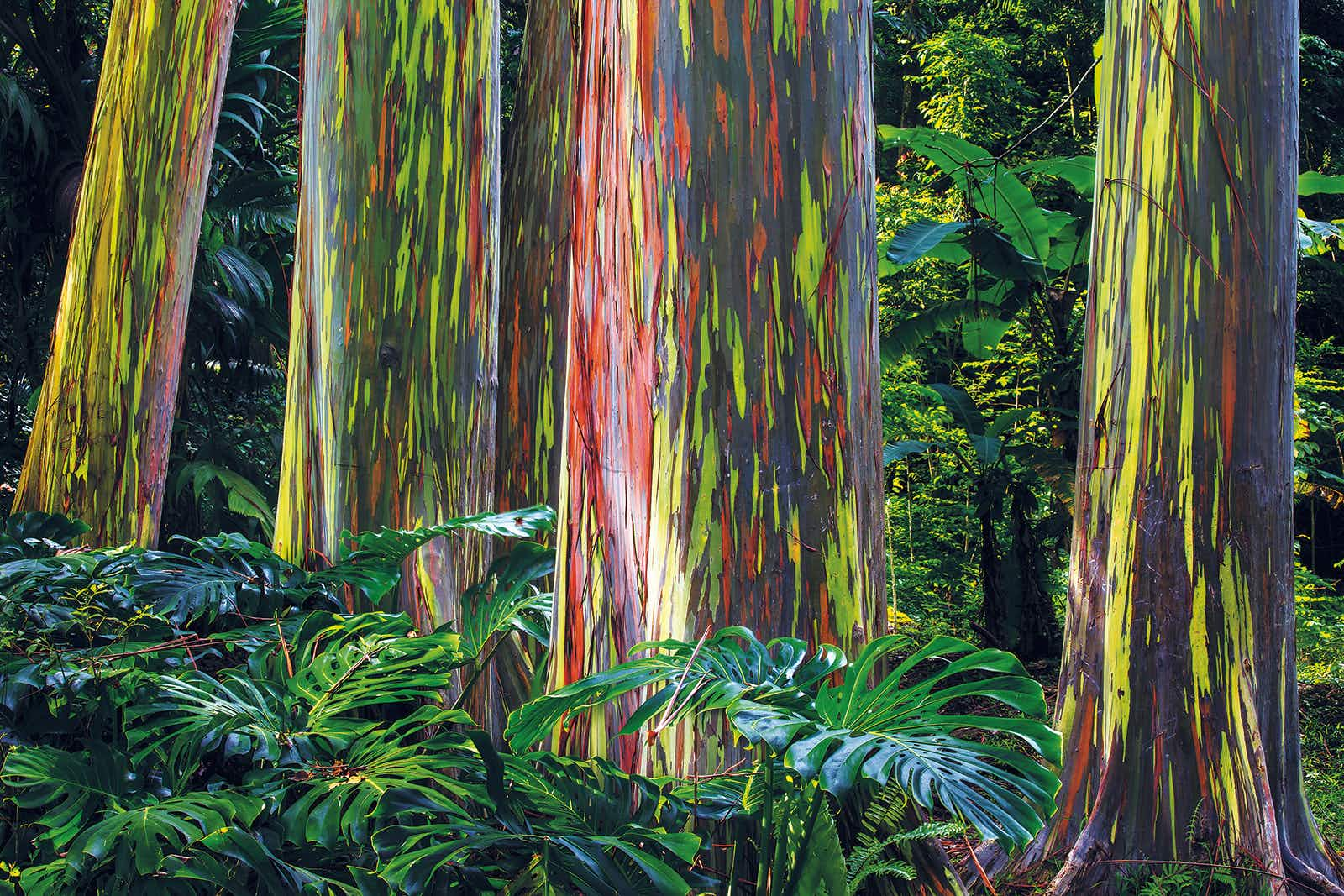 Secret marvels: from painted forests to pink lakes