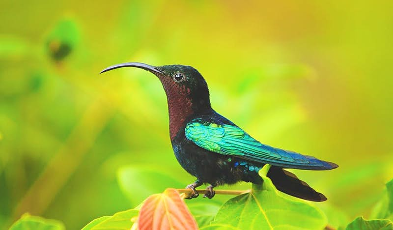 Undeveloped Dominica is a haven for hummingbirds and other wildlife © gydyt0jas © Getty Images
