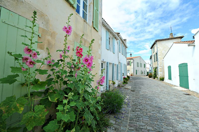 Lavender and hollyhocks along a cobbled lane in St-Martin-de-Ré, next to white and stone houses with pastel-coloured shutters.