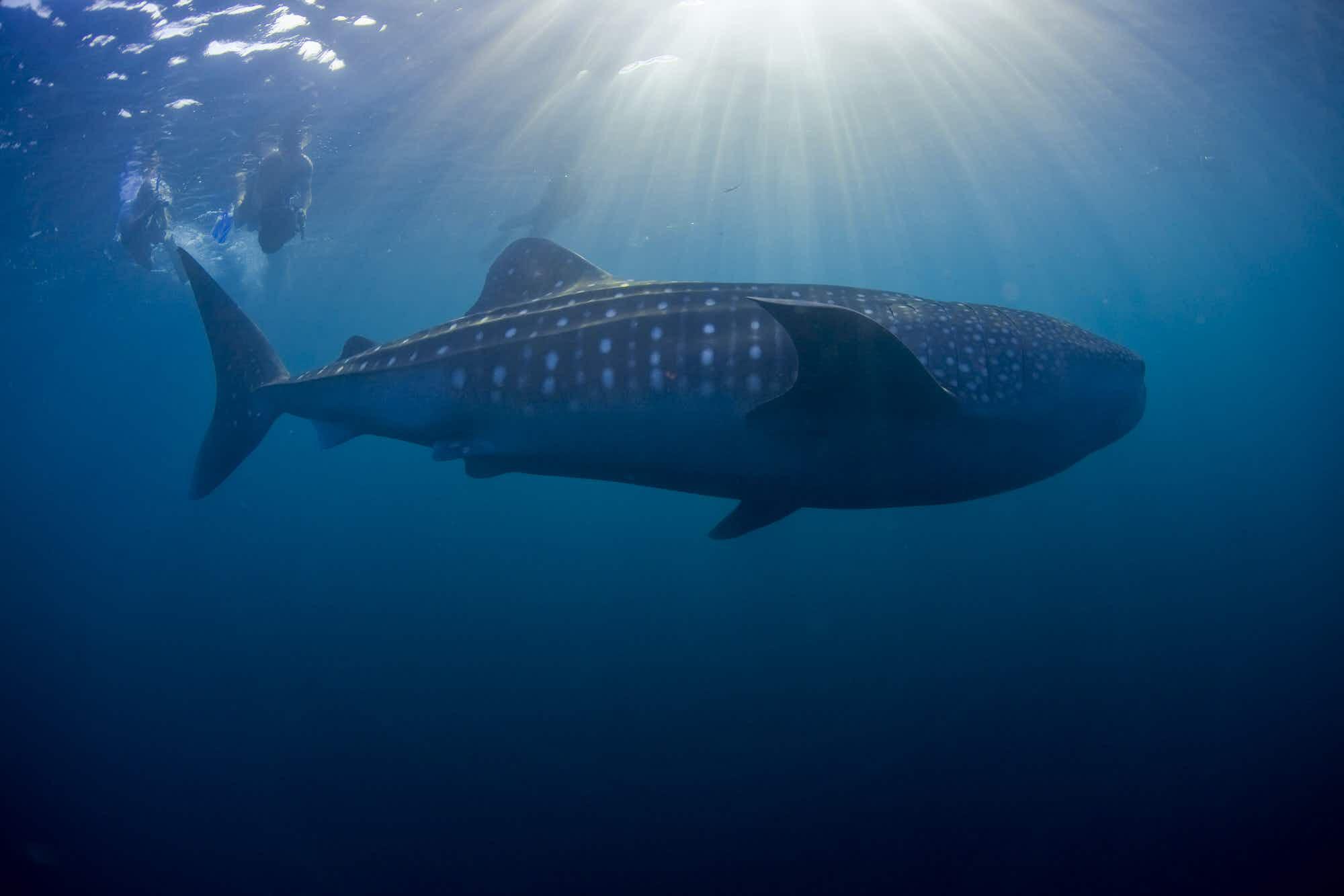 Exploring Djibouti's underwater treasures