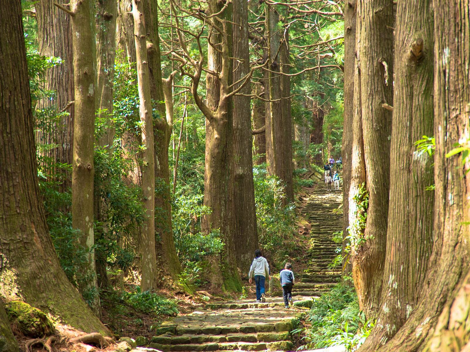 Hiking the Kumano Kodō: Japan's ancient pilgrimage route