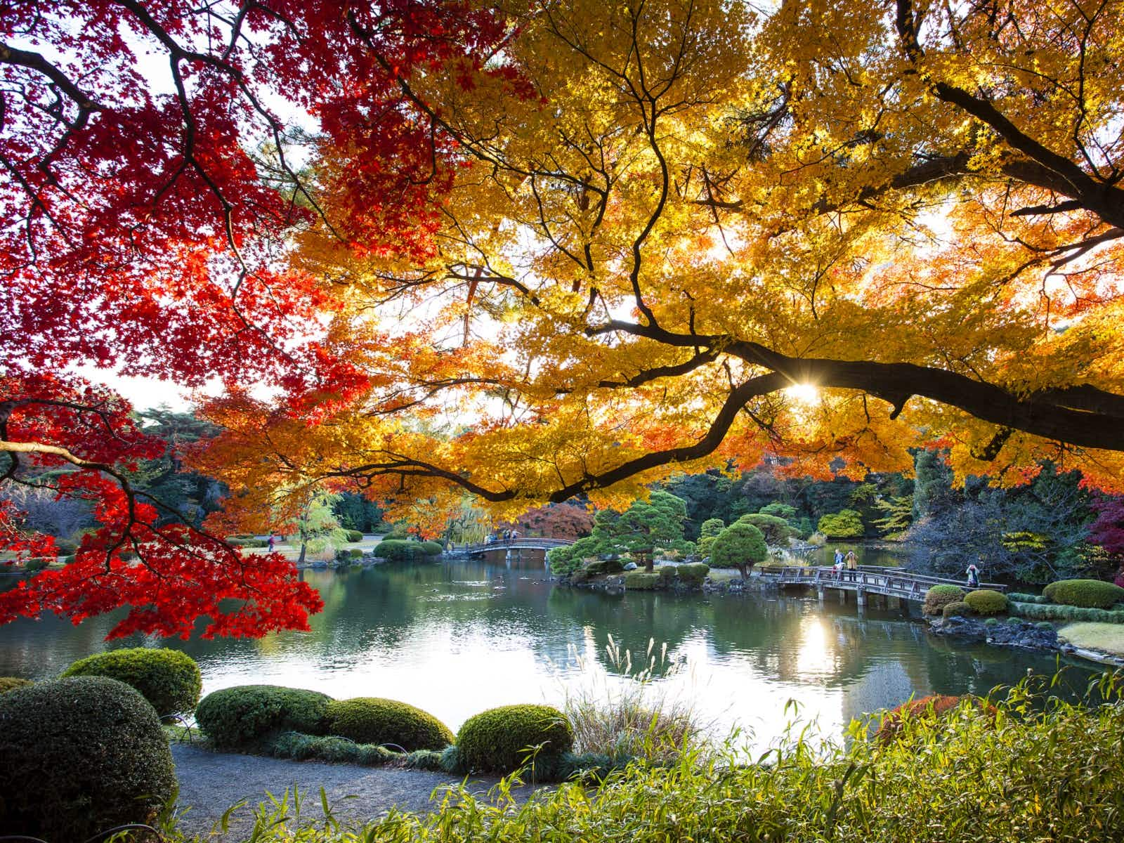 Tokyo in autumn: the best things to do and see