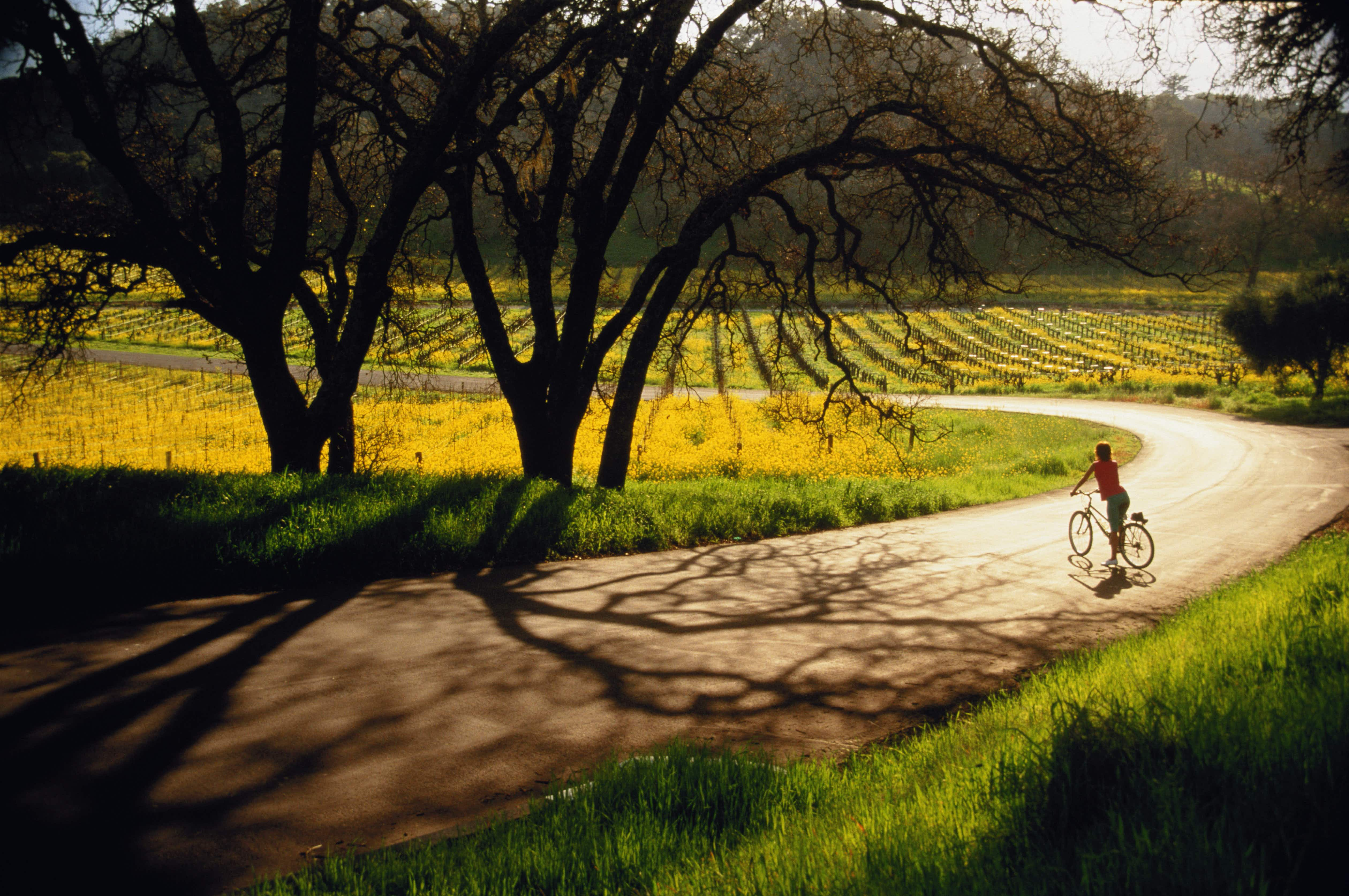 Napa & Sonoma keep the good vibes and visitors coming