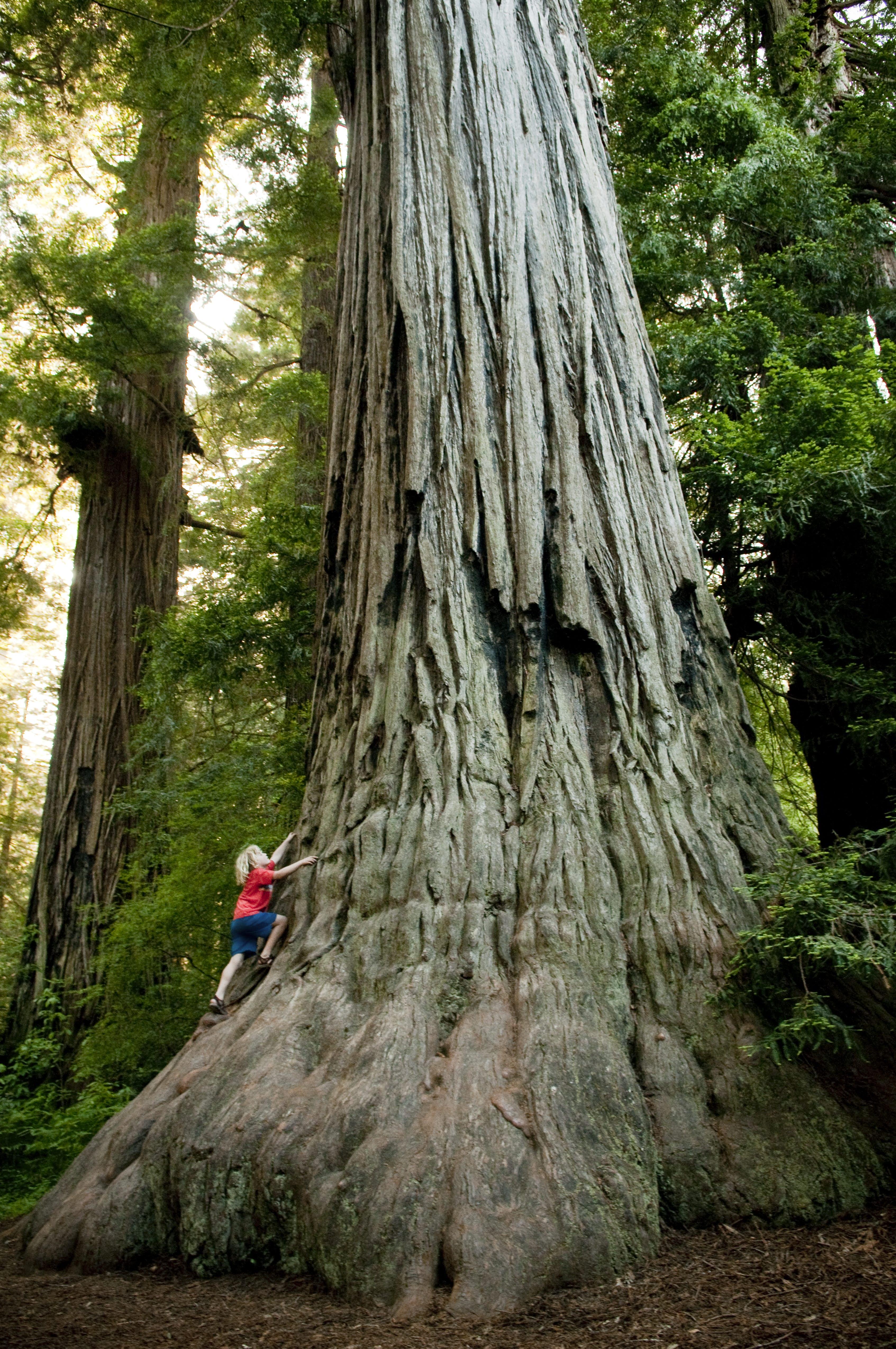 1 dollar tree woodland home decor ideas.htm seeking serenity forest bathing among california s redwoods  seeking serenity forest bathing among