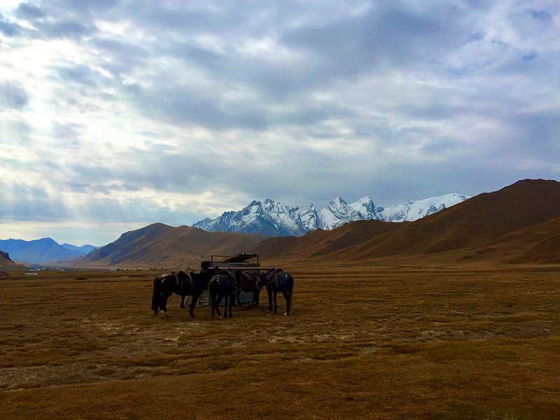 Five horses huddled around a small hitching post in an open valley with mountains in the background © Lonely Planet / Megan Eaves
