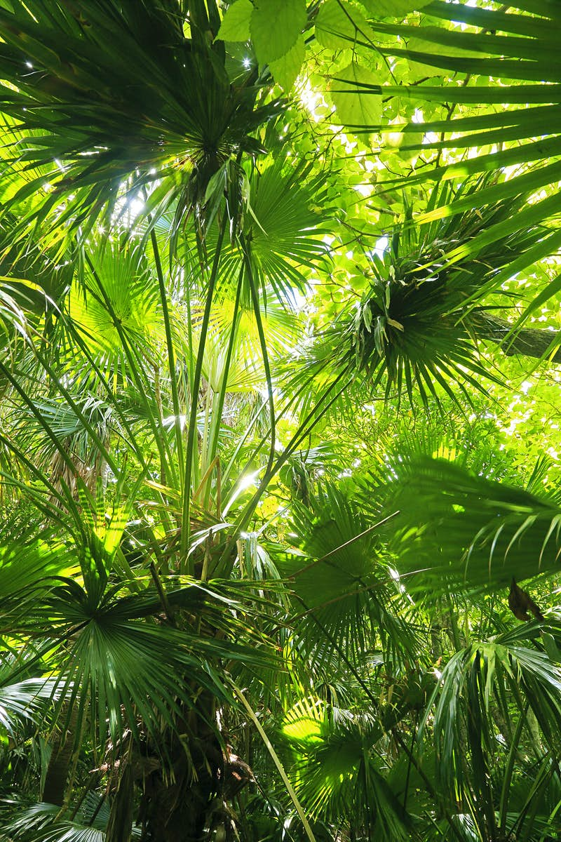 The dense undergrowth of a tropical forest on the Ogasawara Islands ©Amana Images Inc / Getty Images