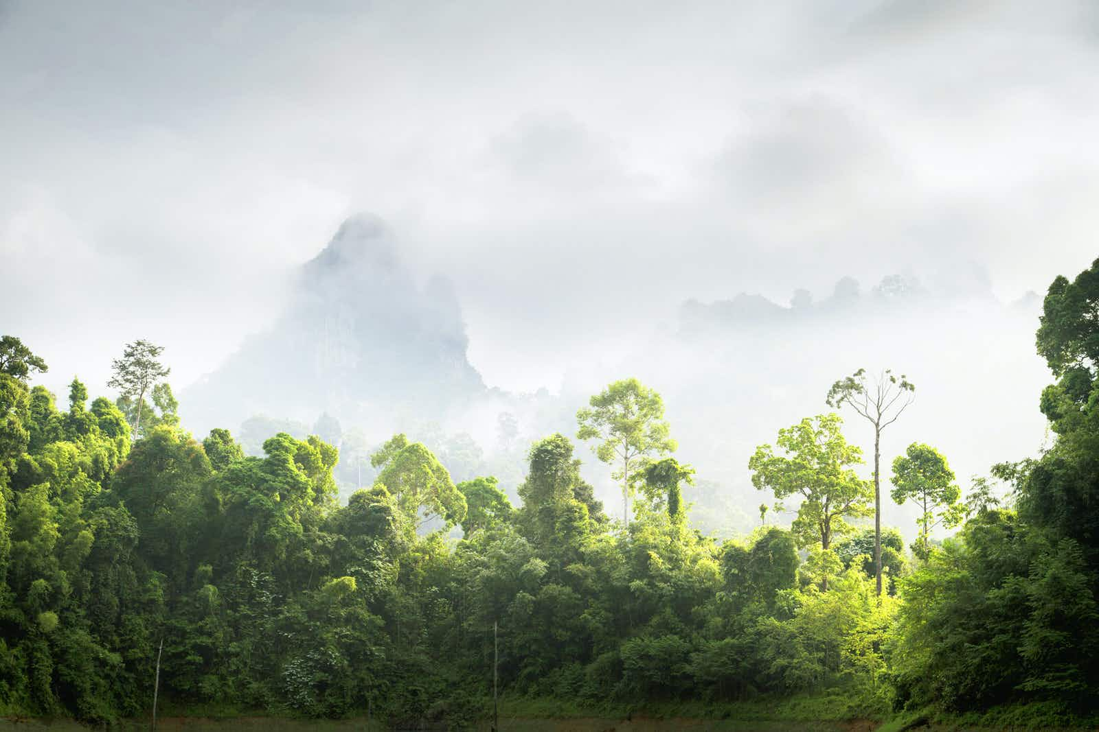 Wild Thailand: exploring Khao Sok National Park