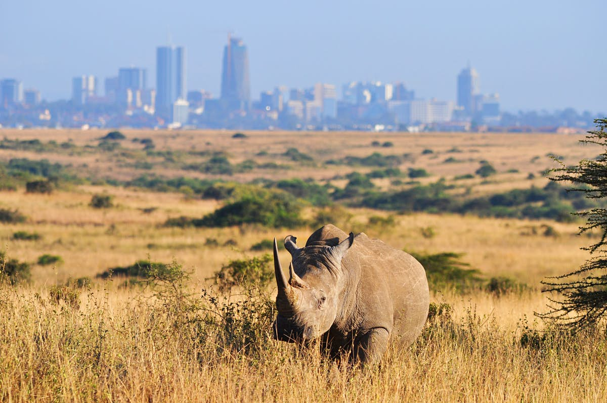 How to live like a Local in Nairobi