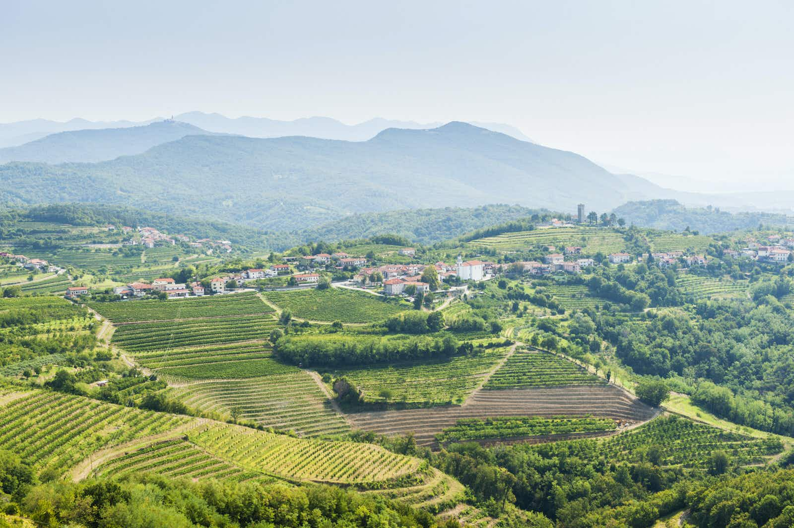 Five reasons to visit Slovenia's western winelands