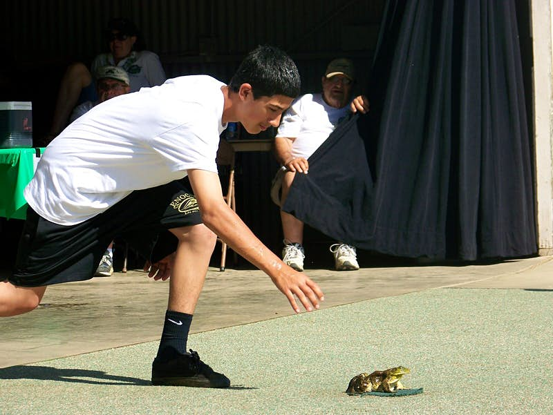A contestant urges their frog to jump as part of the annual frog-jumping festival at Angels Camp, California ©mikluha_maklai/ Shutterstock