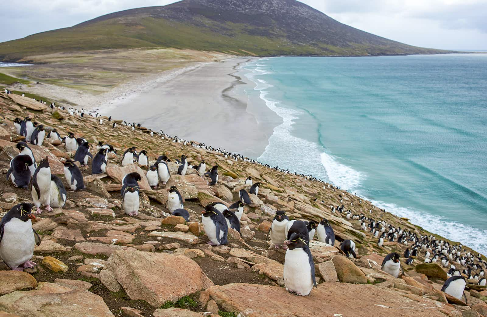An essential guide to the Falkland Islands