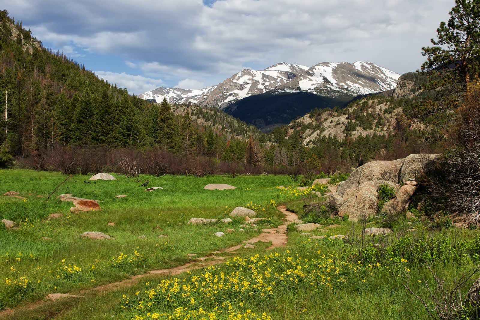 The cub lake trail starts in Morraine Park and winds through the meadows and hills of Rocky Mountain National Park