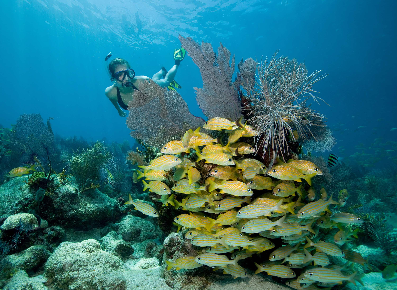 Aquatic thrills in coastal Florida