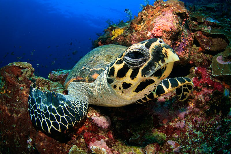 A sea turtle - sporting a somewhat suspicious look - in Komodo National Park © SergeUWPhoto / Shutterstock