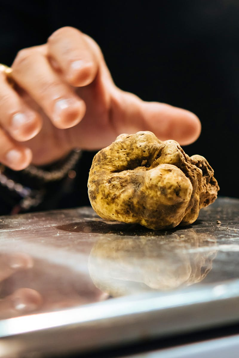 A hand places a white truffle on a scale at a truffle fair in Alba © Yulia Grigoryeva / Shutterstock