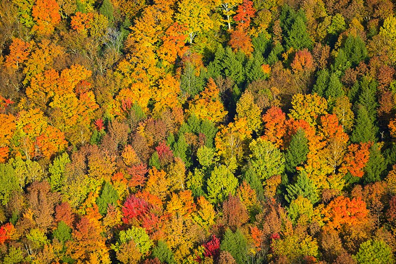 An aerial view of fall foliage in Vermont.
