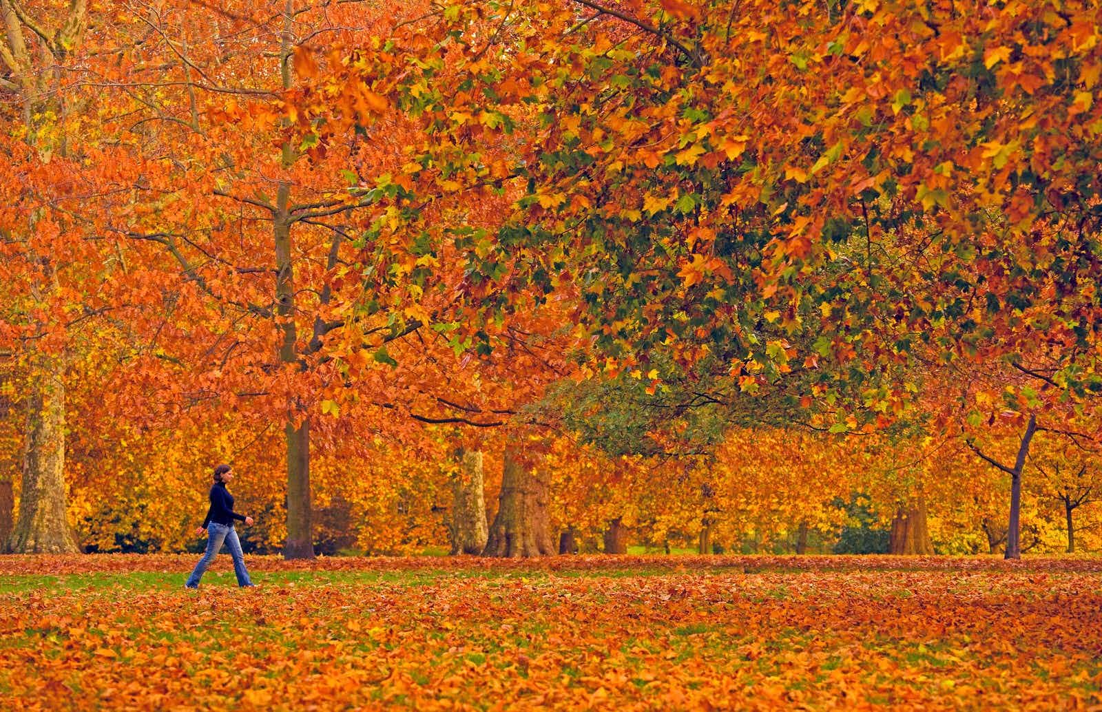 Fall colours, like here in Hyde Park, add a beauitiful backdrop to an autumn visit to London © Scott E Barbour / Getty Images