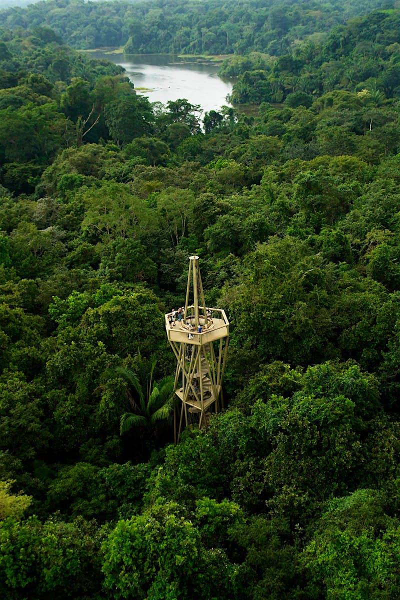 The observation deck at Panama Rainforest Discovery Center in Panama Fundación Avifauna Eugene Eisenmann