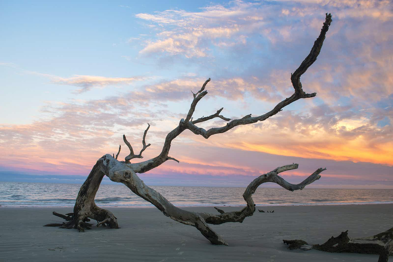 A branch lies on the beach at sunset on Driftwood Beach in Jekyll Island © Christian Herb