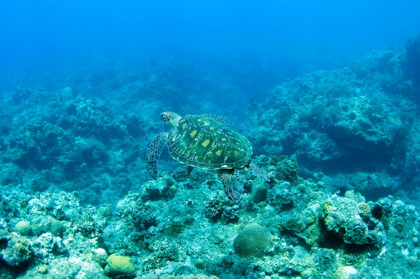 Snorkellers can often spot gentle sea turtles swimming in the shallows off Little Liuchiu © Jung Hsuan / Shutterstock