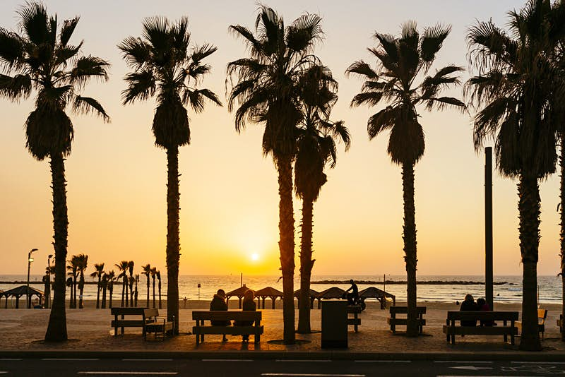 Sunset seen through the palm trees at the beach in Tel Aviv, Israel © Alexander Spatari / Getty Images