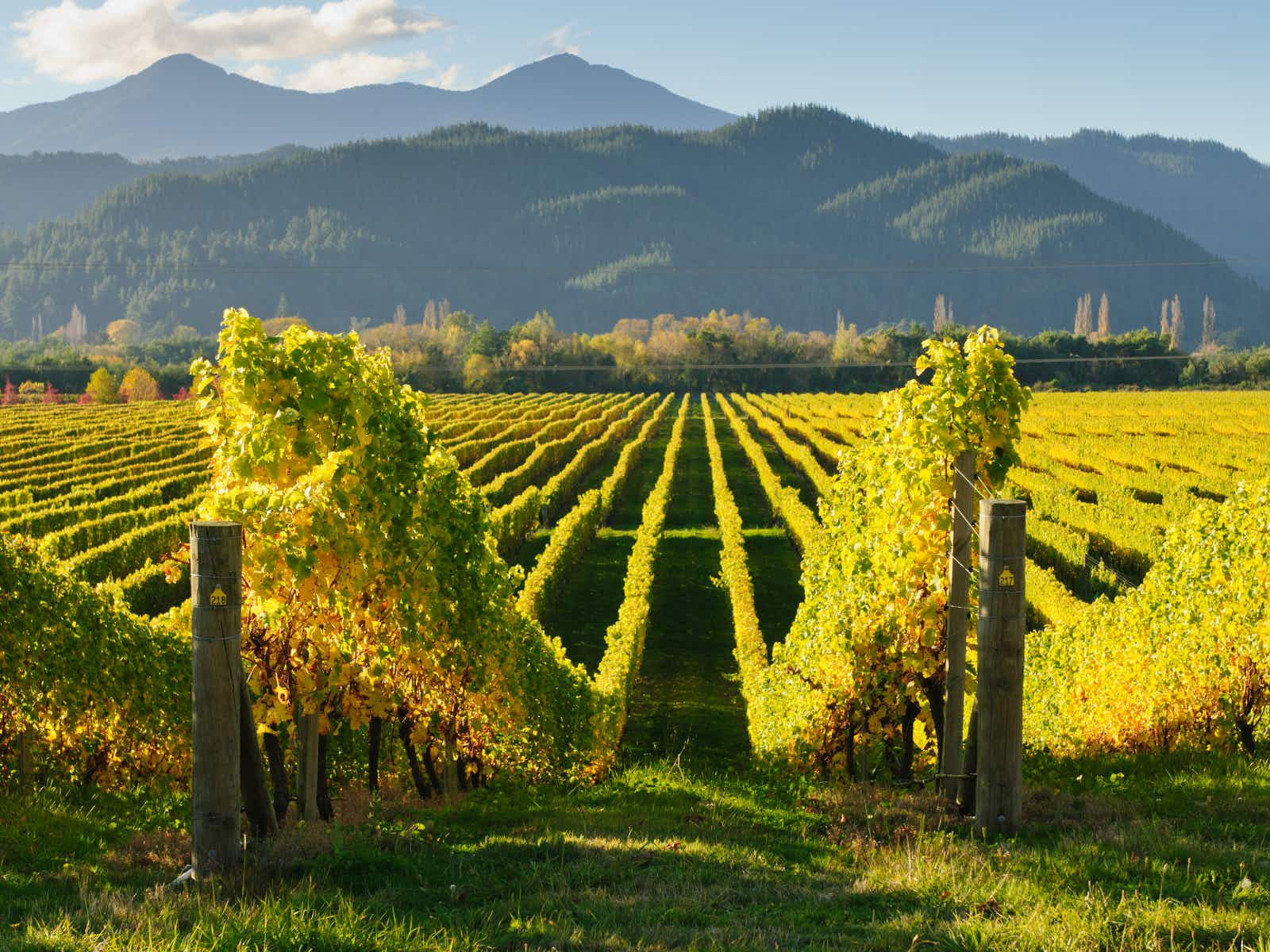 Ten of Australia and New Zealand's most intriguing wine regions