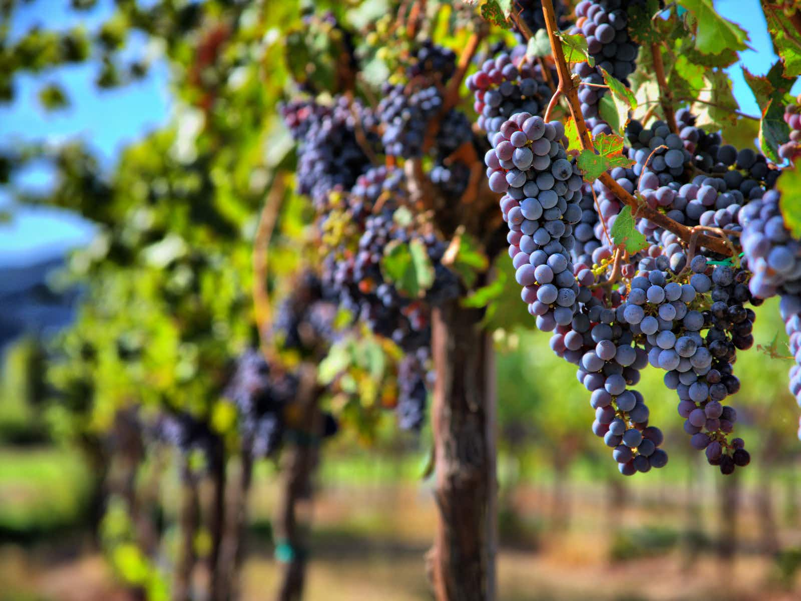 Ten of North America's most intriguing wine regions