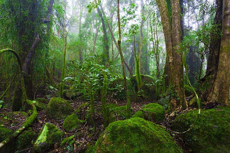A misty rainforest in Australia.